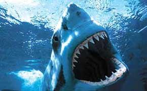 rêver de requin.