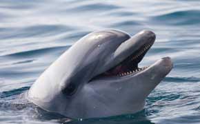 rêver de dauphin islam.